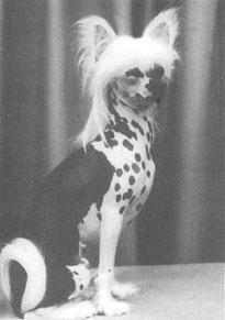 История породы  Китайская хохлатая собака