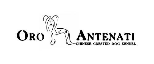 Китайская хохлатая собака — питомник  Оро Антенати