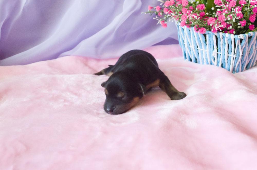 Новорожденные щенки