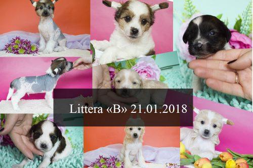литтера Б 21.01.2018